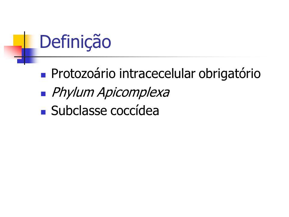 Definição Protozoário intracecelular obrigatório Phylum Apicomplexa Subclasse coccídea