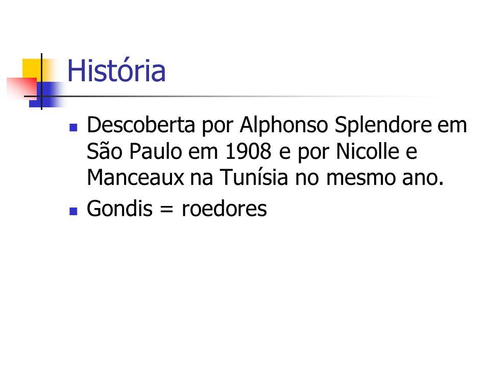 História Descoberta por Alphonso Splendore em São Paulo em 1908 e por Nicolle e Manceaux na Tunísia no mesmo ano. Gondis = roedores