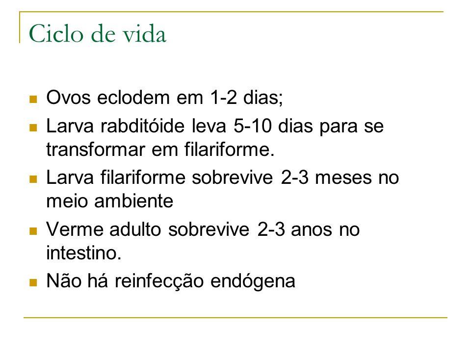 Ovos eclodem em 1-2 dias; Larva rabditóide leva 5-10 dias para se transformar em filariforme. Larva filariforme sobrevive 2-3 meses no meio ambiente V