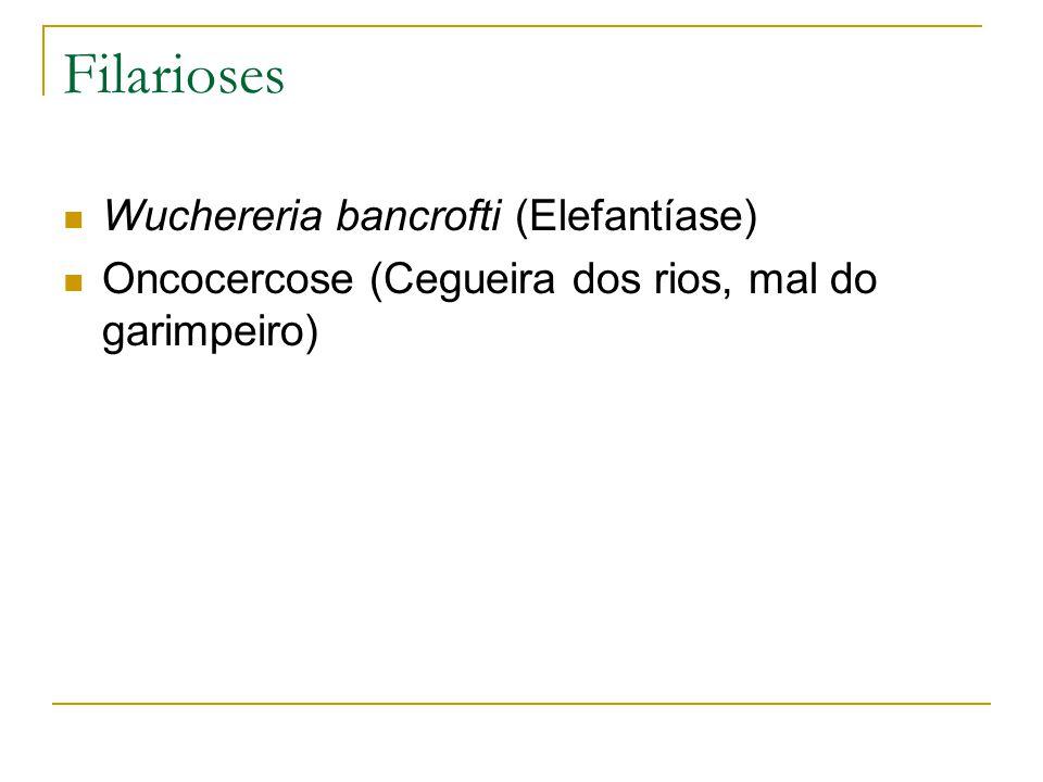 Wuchereria bancrofti (Elefantíase) Oncocercose (Cegueira dos rios, mal do garimpeiro)