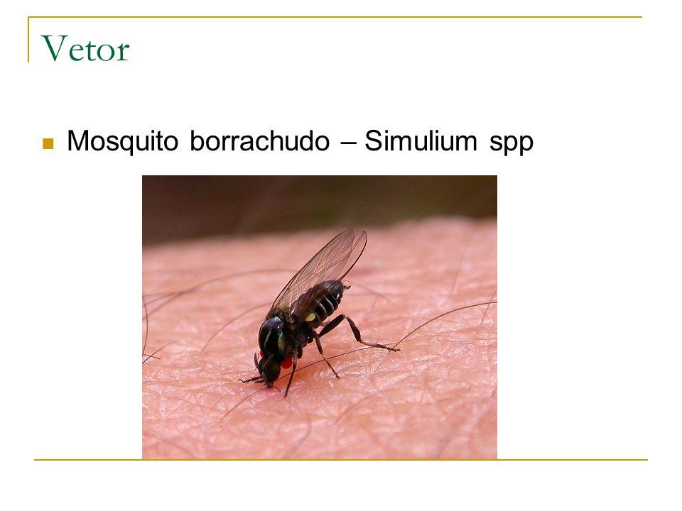 Vetor Mosquito borrachudo – Simulium spp