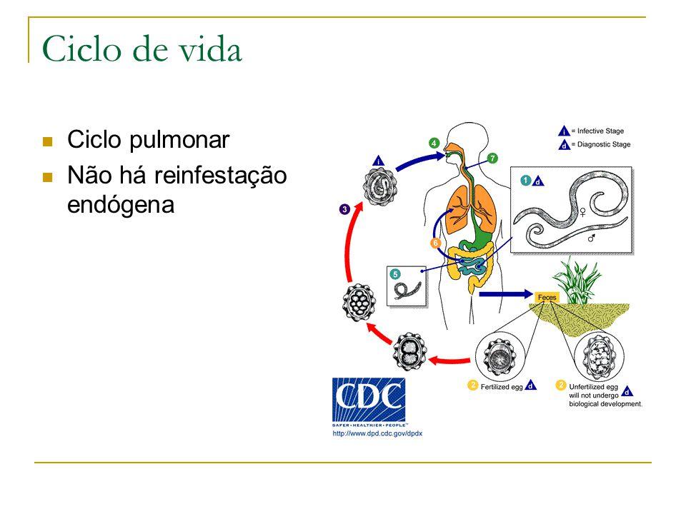 Estrongiloidíase disseminada Ocorre em imunossuprimidos (HIV, DM, desnutrição, QT...) Parasitas entram na corrente sanguínea e levam bactérias consigo.