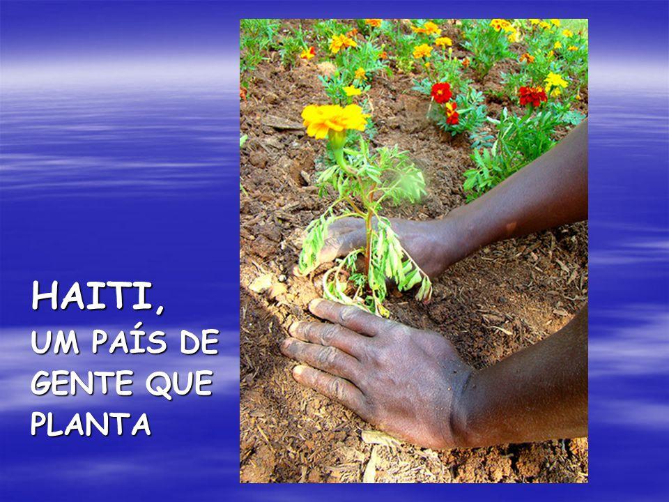 HAITI, UM PAÍS DE GENTE QUE PLANTA