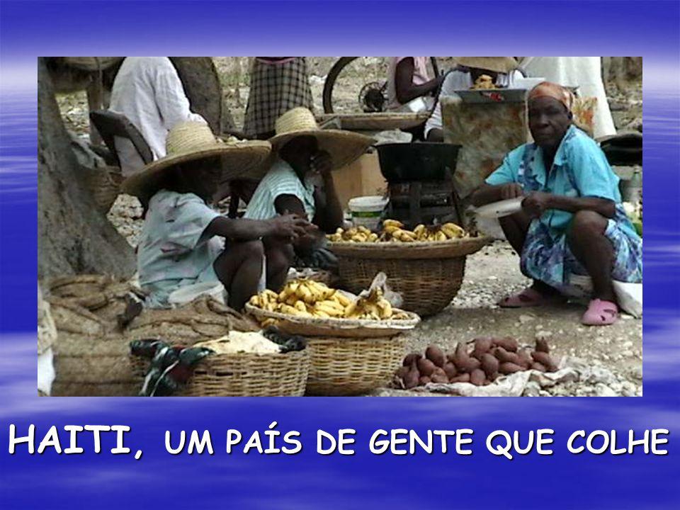 HAITI, UM PAÍS DE GENTE QUE COLHE