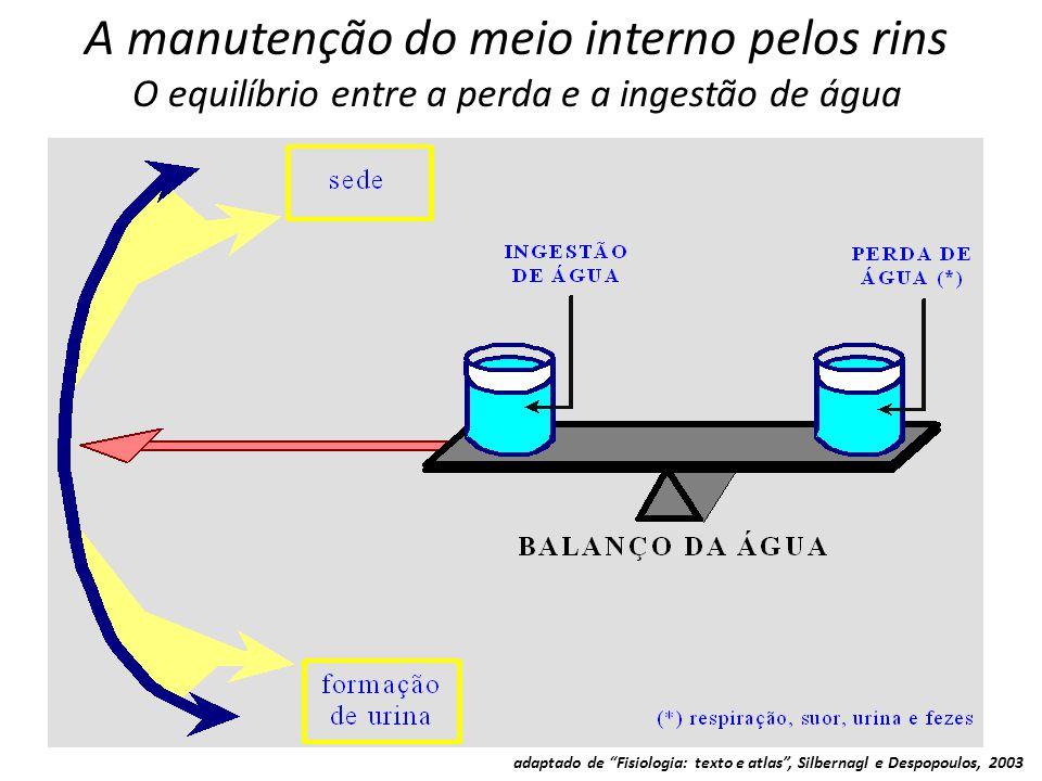 """A manutenção do meio interno pelos rins O equilíbrio entre a perda e a ingestão de água adaptado de """"Fisiologia: texto e atlas"""", Silbernagl e Despopou"""