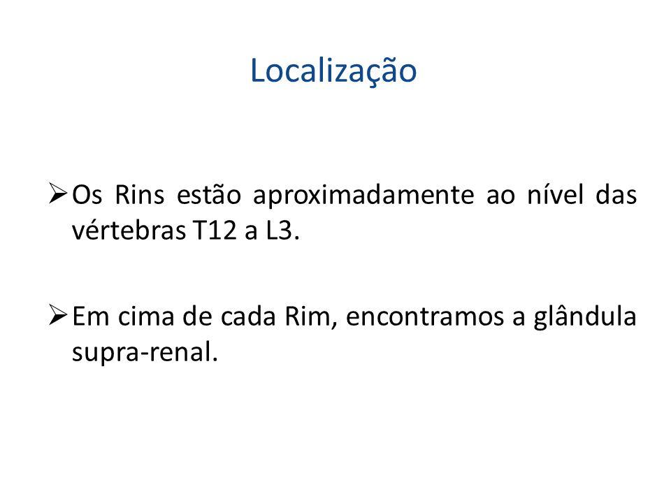 Localização  Os Rins estão aproximadamente ao nível das vértebras T12 a L3.  Em cima de cada Rim, encontramos a glândula supra-renal.