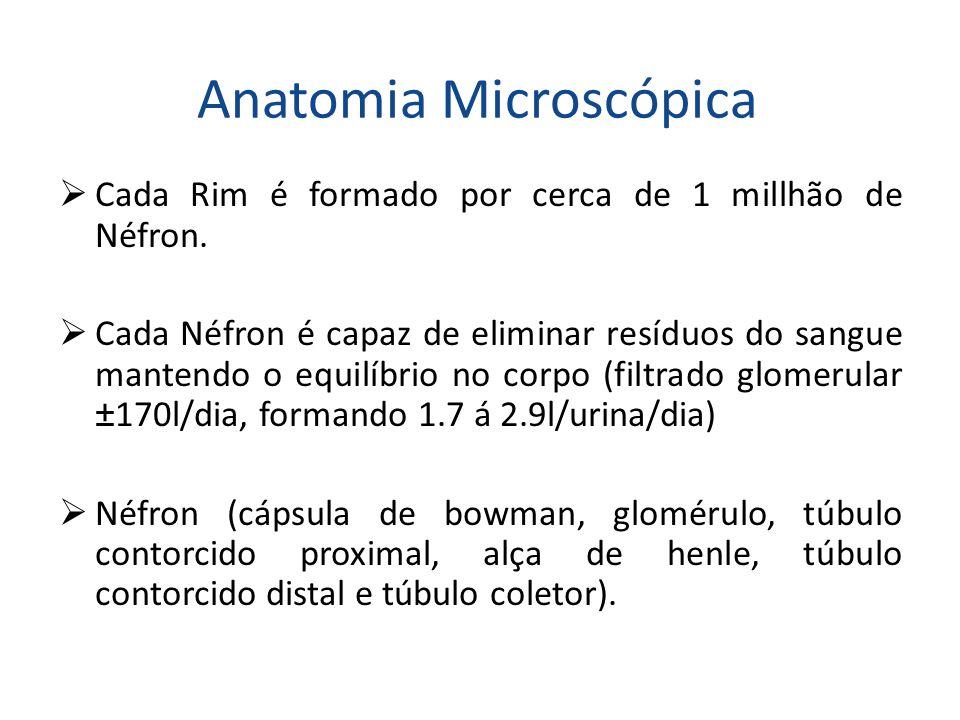 Anatomia Microscópica  Cada Rim é formado por cerca de 1 millhão de Néfron.  Cada Néfron é capaz de eliminar resíduos do sangue mantendo o equilíbri