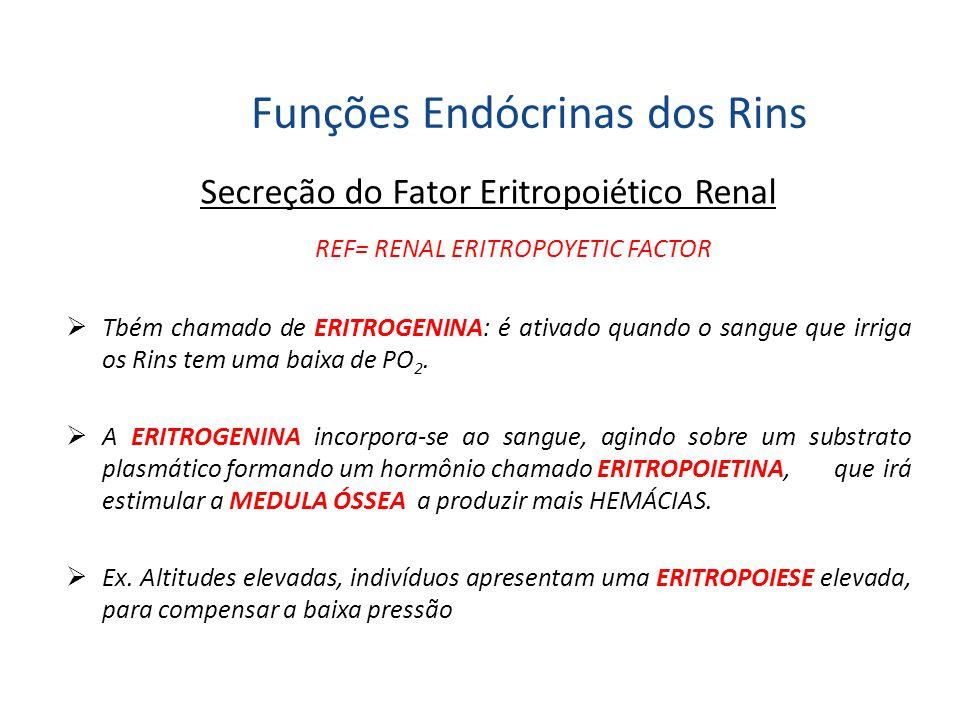 Funções Endócrinas dos Rins Secreção do Fator Eritropoiético Renal REF= RENAL ERITROPOYETIC FACTOR  Tbém chamado de ERITROGENINA: é ativado quando o