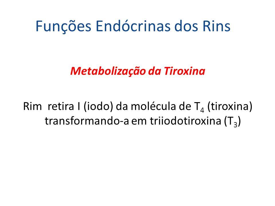 Funções Endócrinas dos Rins Metabolização da Tiroxina Rim retira I (iodo) da molécula de T 4 (tiroxina) transformando-a em triiodotiroxina (T 3 )