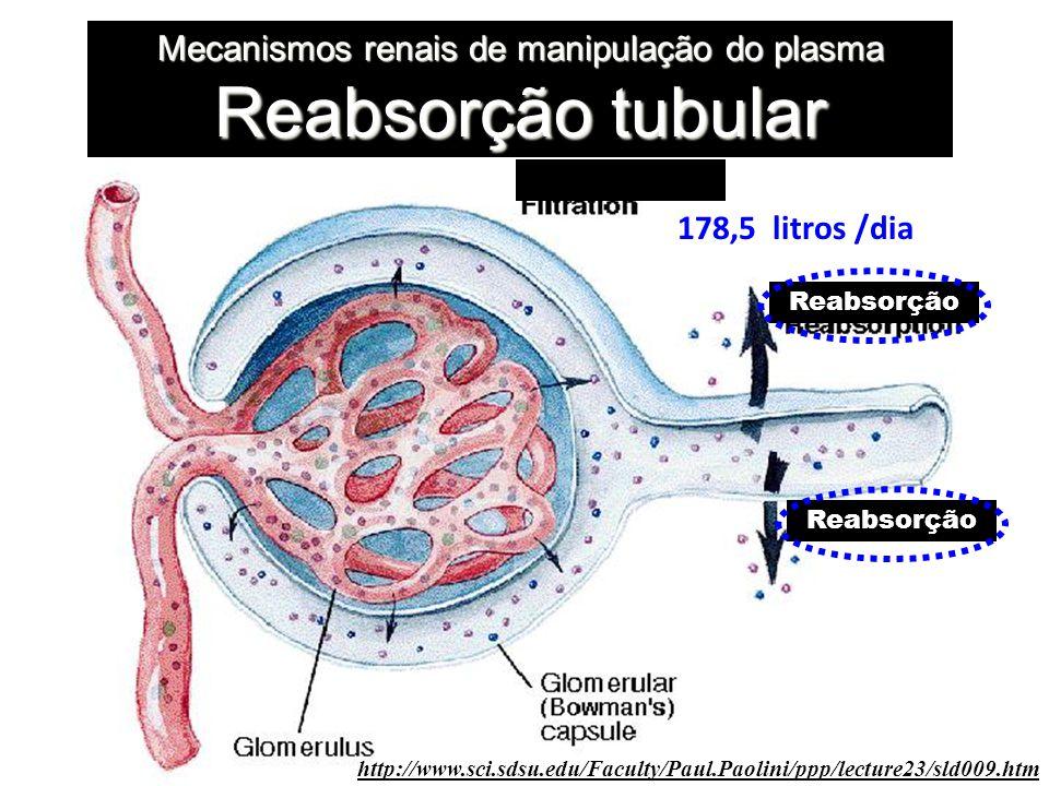 Mecanismos renais de manipulação do plasma Reabsorção tubular http://www.sci.sdsu.edu/Faculty/Paul.Paolini/ppp/lecture23/sld009.htm 178,5 litros /dia