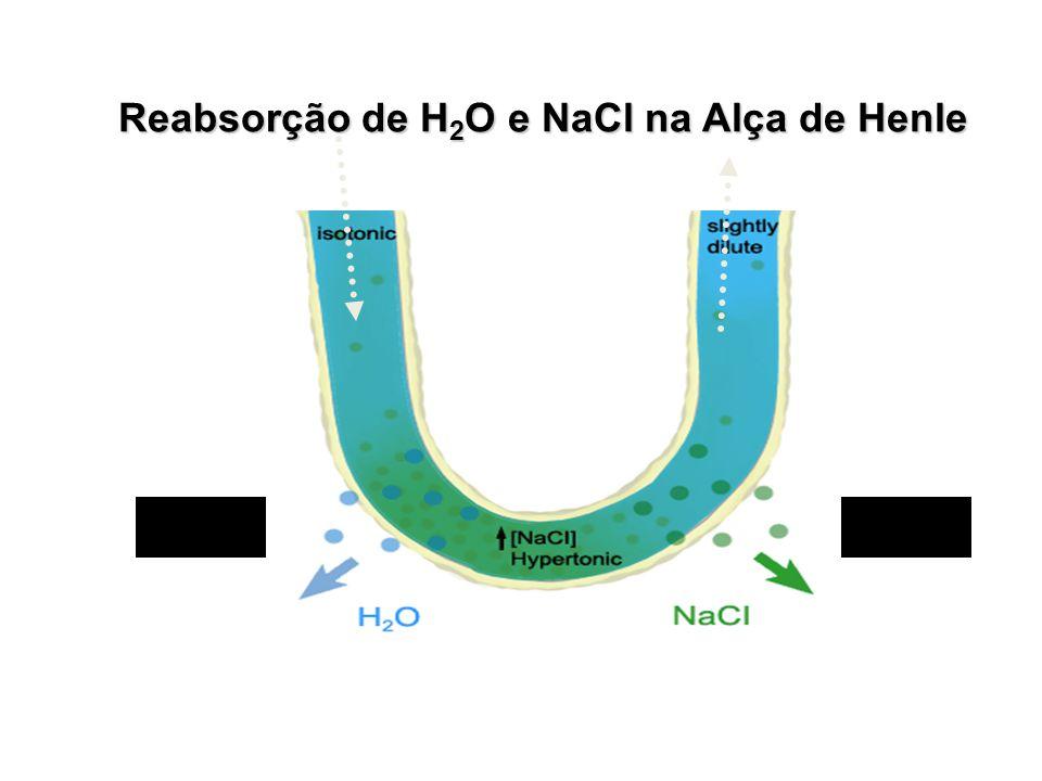 Reabsorção de H 2 O e NaCl na Alça de Henle