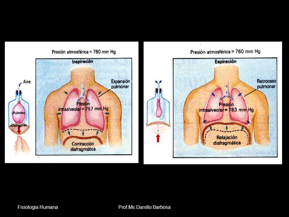 Anatomia Sistema Respiratório Fisiologia HumanaProf.Ms.Danillo Barbosa