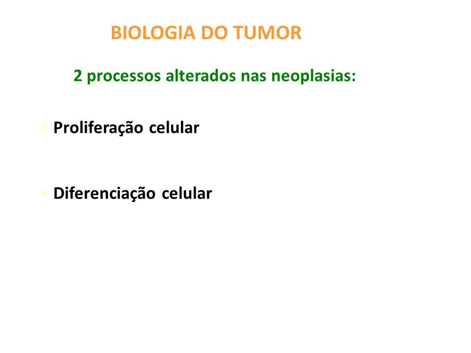 Proliferação celular Diferenciação celular BIOLOGIA DO TUMOR 2 processos alterados nas neoplasias: