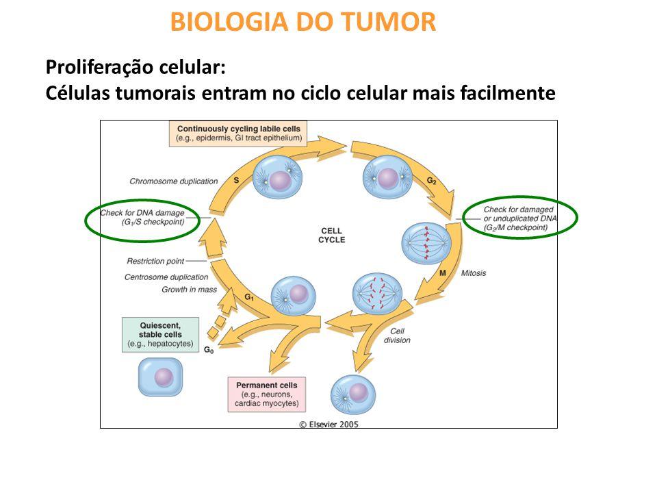 BIOLOGIA DO TUMOR Proliferação celular: Células tumorais entram no ciclo celular mais facilmente