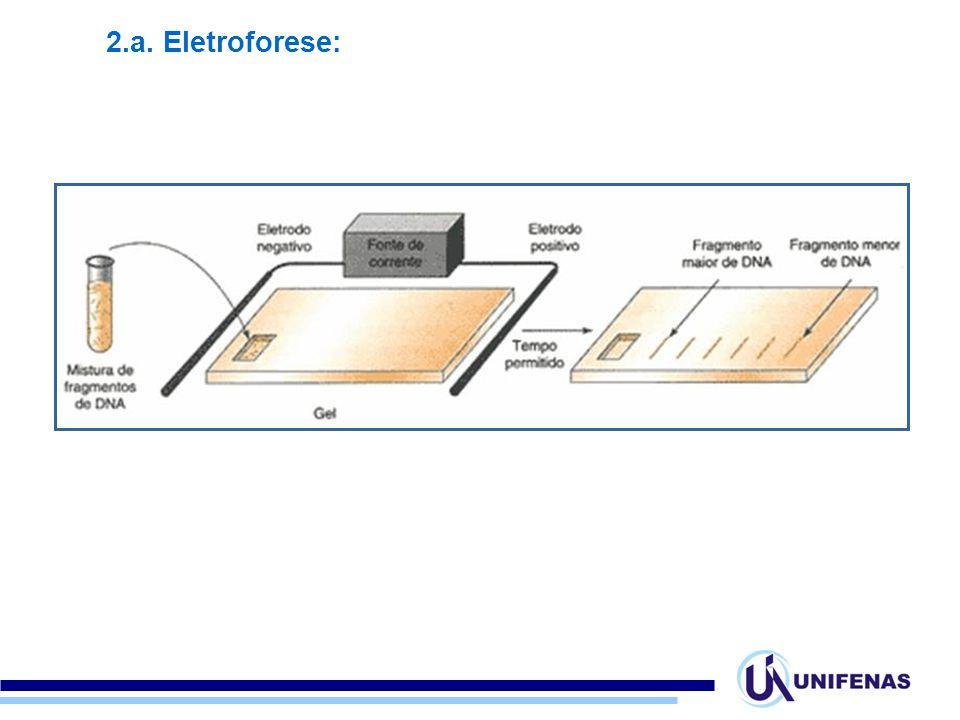 2.a. Eletroforese: