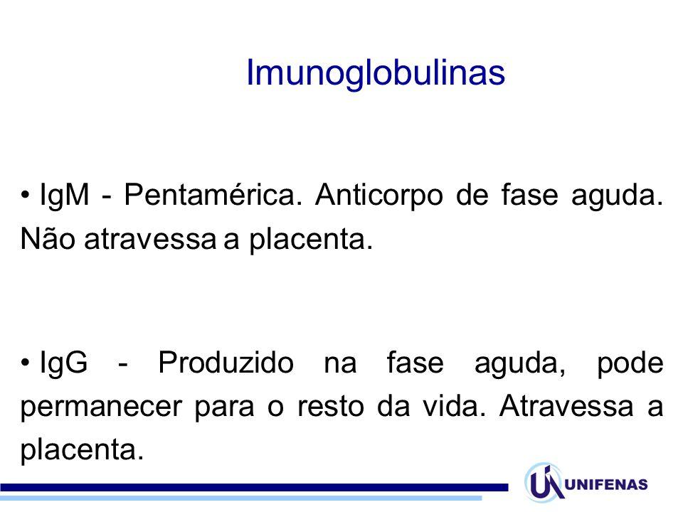IgM - Pentamérica. Anticorpo de fase aguda. Não atravessa a placenta. IgG - Produzido na fase aguda, pode permanecer para o resto da vida. Atravessa a
