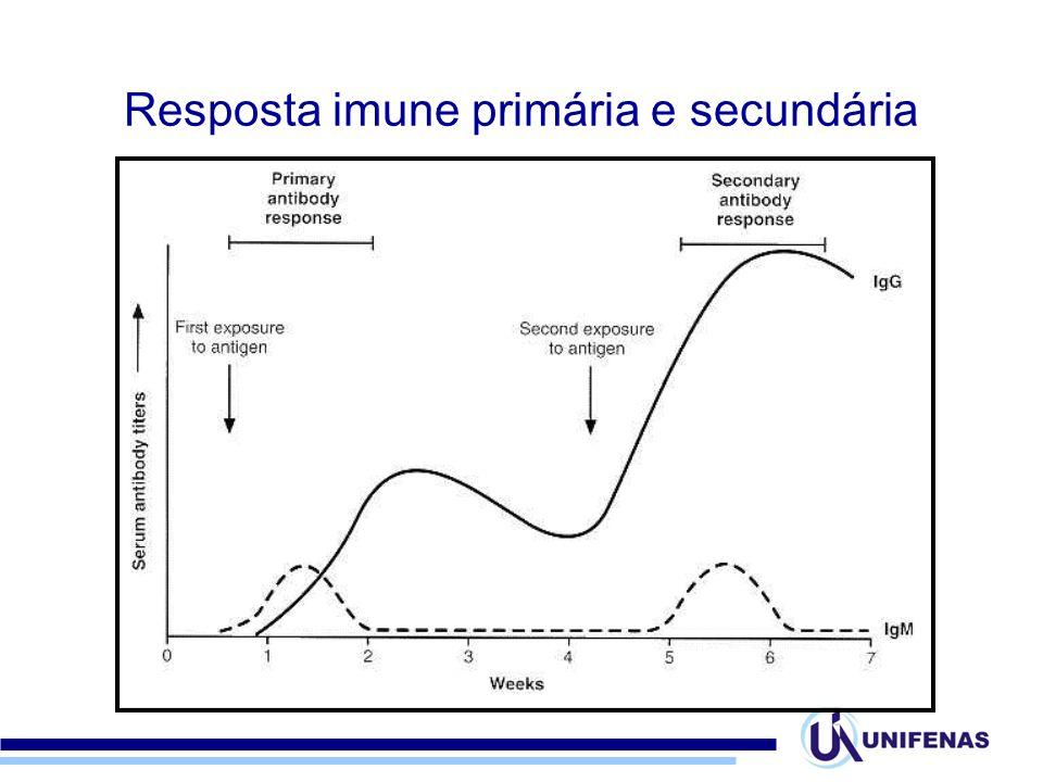 Resposta imune primária e secundária