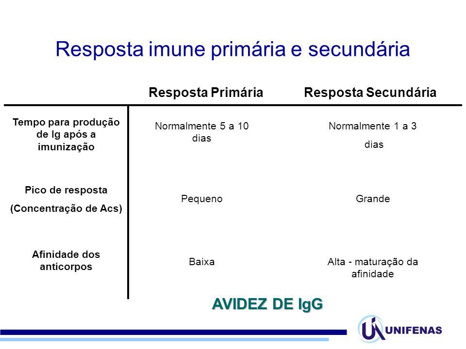 Resposta PrimáriaResposta Secundária Tempo para produção de Ig após a imunização Pico de resposta (Concentração de Acs) Afinidade dos anticorpos Norma