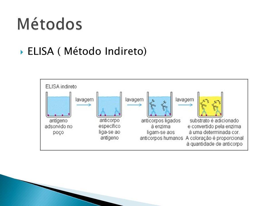  ELISA ( Método Indireto)