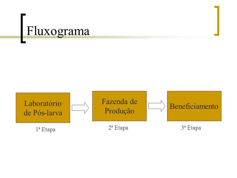 Definição Diz respeito às fases ou etapas realizadas para obtenção do produto que é o resultado do trabalho Configura-se em quatro etapas  Obtenção e