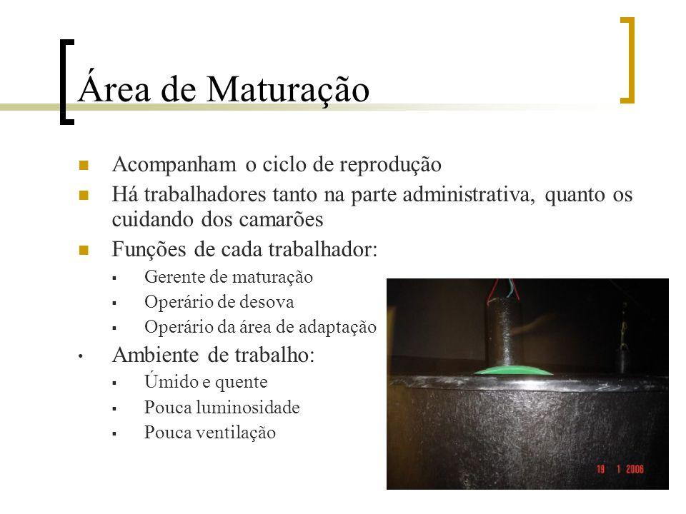 Fazendo de Pós-larvas Compreende duas fases:  Maturação  Larvinivultura Serviços complementares:  Laboratório para Análise Bacteriológica  Microsc