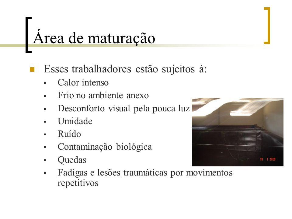 Área de Maturação Acompanham o ciclo de reprodução Há trabalhadores tanto na parte administrativa, quanto os cuidando dos camarões Funções de cada tra