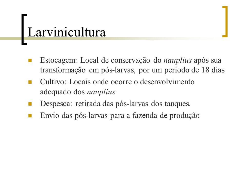 Larvinicultura Despescadores de pós-larvas estão sujeitos à:  Contato com os resíduos alimentares dos nauplius  Parasitos, bactérias e toxinas liber