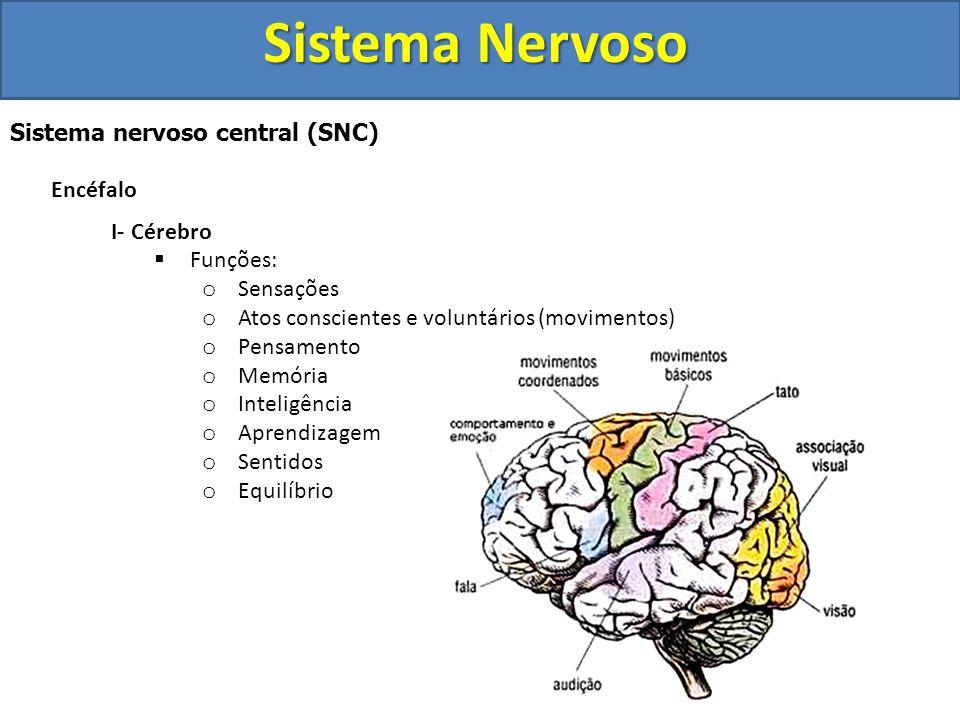 Sistema Nervoso Sistema nervoso central (SNC) Encéfalo I-Cérebro  Constitui cerca de 90% da massa encefálica  Sua superfície é bastante pregueada 