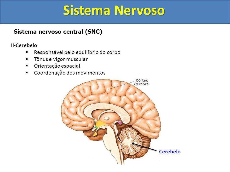 Sistema Nervoso Sistema nervoso central (SNC) Cérebro Tálamo e Hipotálamo Tálamo Hipotálamo
