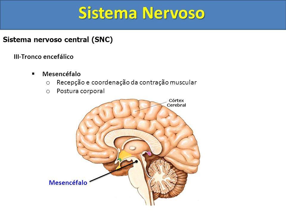 Sistema Nervoso Sistema nervoso central (SNC) III-Tronco encefálico 3 divisões:  Mesencéfalo  Ponte  Bulbo Mesencéfalo Ponte Bulbo