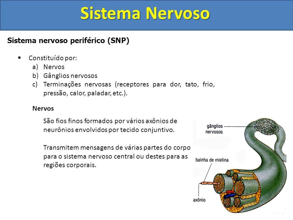 Sistema Nervoso Sistema nervoso periférico (SNP)