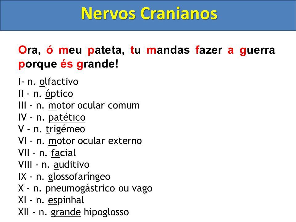 Sistema Nervoso Sistema nervoso periférico (SNP) Classificação dos nervos I)Quanto ao tipo de neurônio  Sensitivos ou aferentes (contém apenas neurôn