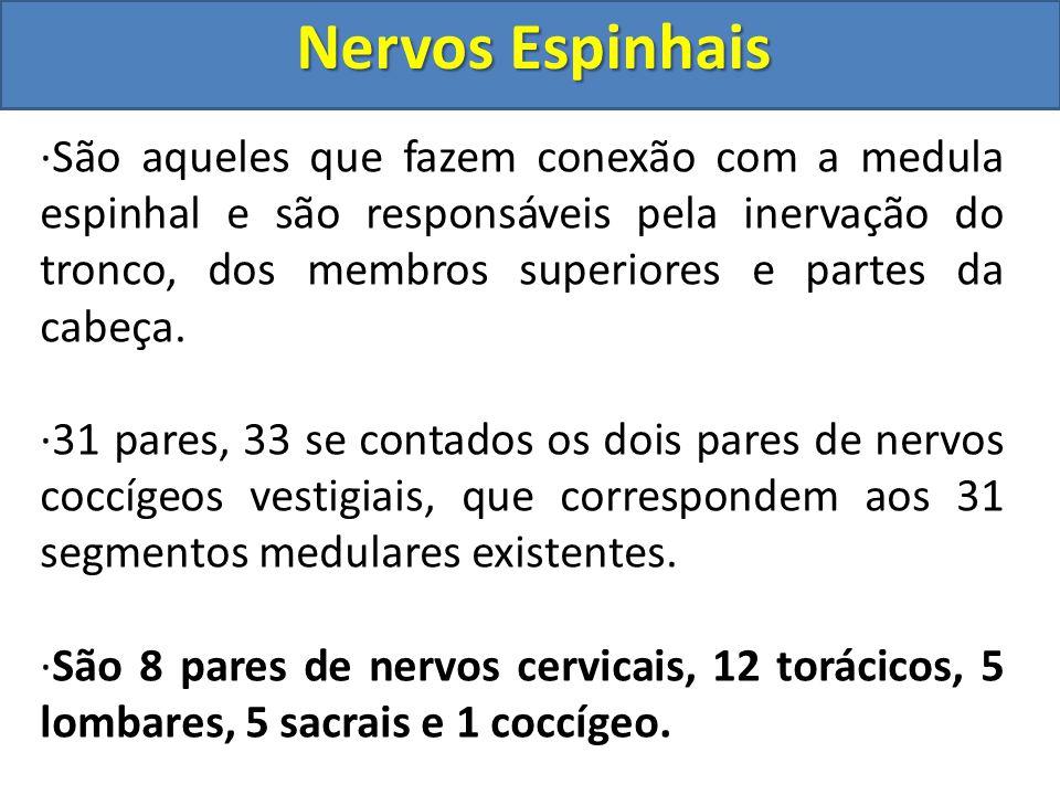 Nervos Cranianos Nervos Cranianos