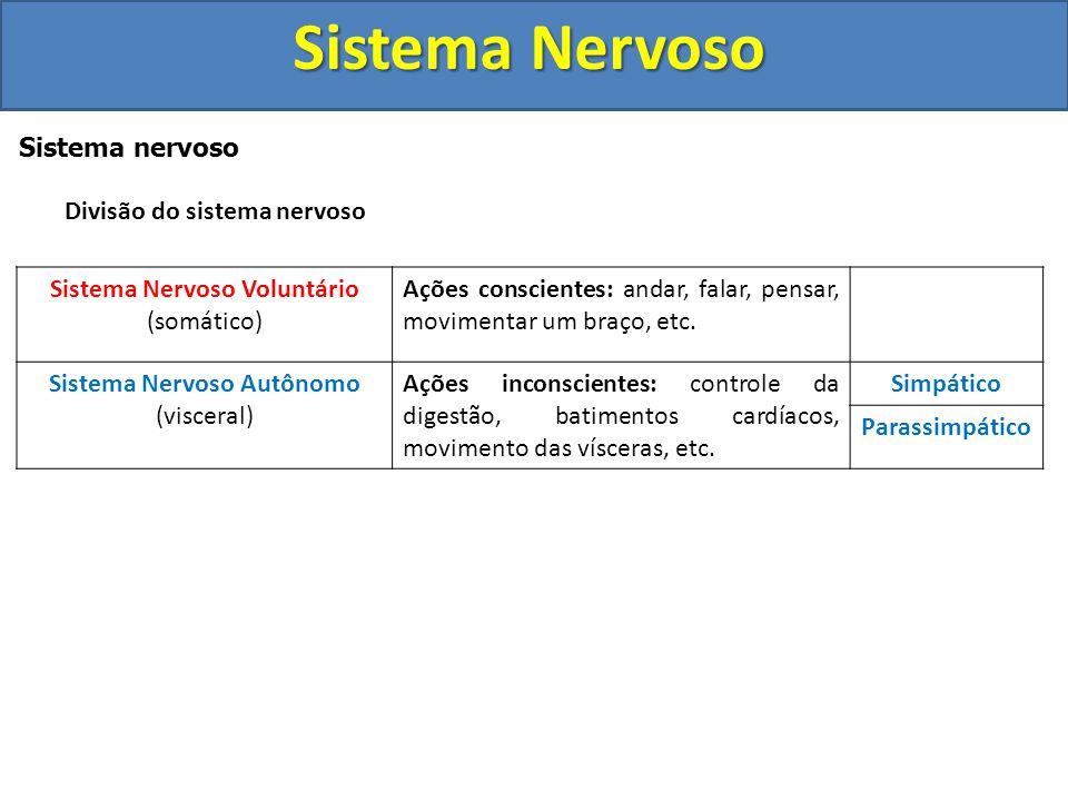 Sistema Nervoso Sistema nervoso periférico (SNP) Terminações Nervosas Captam estímulos do meio interno ou externo e os levam para o sistema nervoso ce
