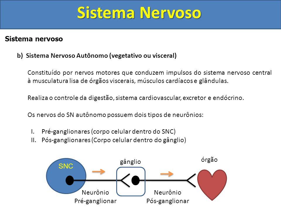 Sistema Nervoso Sistema nervoso a)Sistema Nervoso Voluntário (Somático) Formado por nervos motores que conduzem impulsos do sistema nervoso central (S