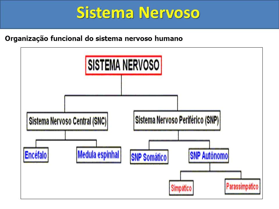 Muito embora exista apenas um sistema nervoso, ele pode ser separado em várias partes, baseando-se em características funcionais e de localização. Est