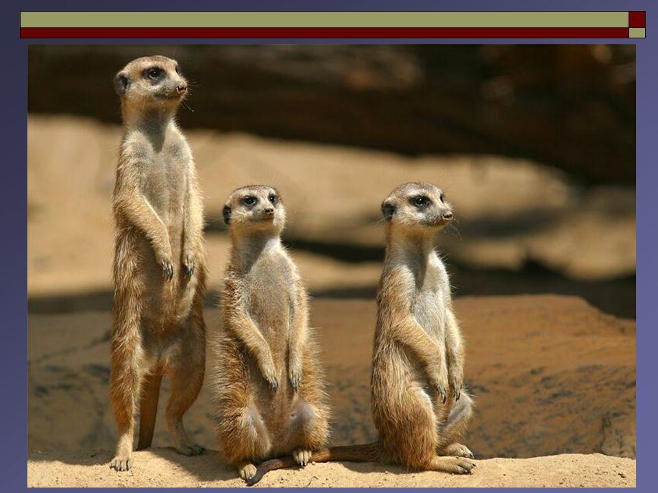 13 DISCRASIAS PLASMACÍTICAS : Mieloma Múltiplo  Mieloma Múltiplo (Sintomático ou Overt) : Critérios para o Diagnóstico e Classificação das Gamopatias Monoclonais da IMWG (International Myeloma Working Group) Lesão Orgânica Terminal (End Organ Damage)  Mieloma Múltiplo (Sintomático ou Overt) : Critérios para o Diagnóstico e Classificação das Gamopatias Monoclonais da IMWG (International Myeloma Working Group) Lesão Orgânica Terminal (End Organ Damage) IMWG.