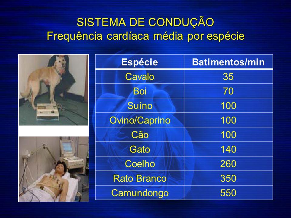SISTEMA DE CONDUÇÃO Frequência cardíaca média por espécie Espécie Batimentos/min Cavalo35 Boi70 Suíno100 Ovino/Caprino100 Cão100 Gato140 Coelho260 Rat