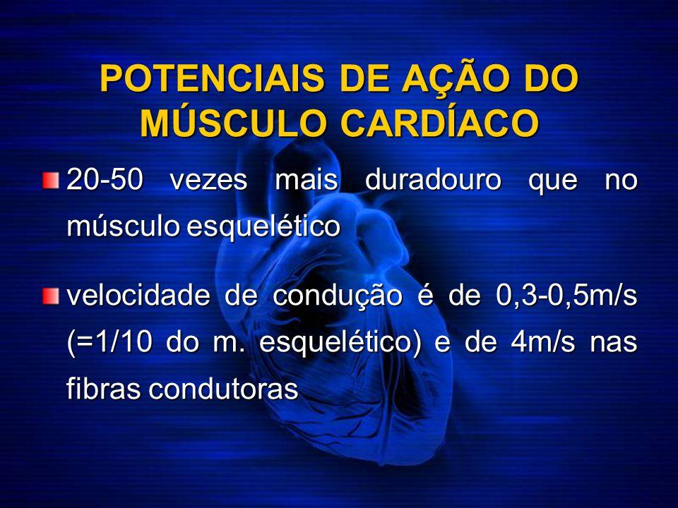 POTENCIAIS DE AÇÃO DO MÚSCULO CARDÍACO 20-50 vezes mais duradouro que no músculo esquelético velocidade de condução é de 0,3-0,5m/s (=1/10 do m. esque