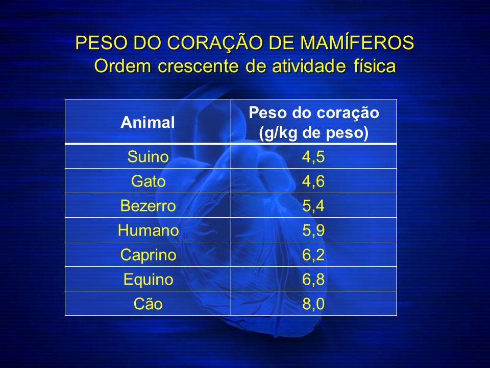 PESO DO CORAÇÃO DE MAMÍFEROS Ordem crescente de atividade física Animal Peso do coração (g/kg de peso) Suino4,5 Gato4,6 Bezerro5,4 Humano5,9 Caprino6,