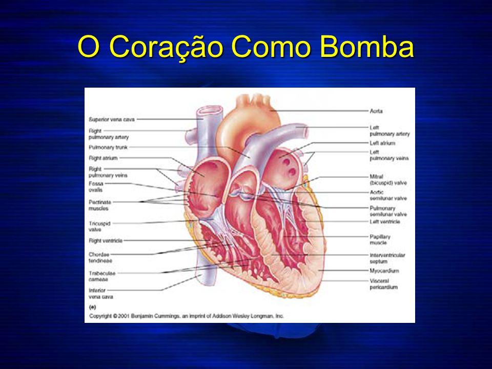 Camadas da Parede Cardíaca