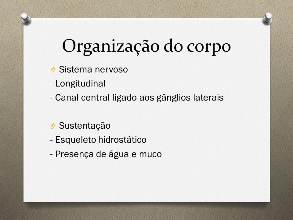 Organização do corpo O Sistema circulatório - Fechado O Respiração - Cutânea ou brânquias atrofiadas e modificadas