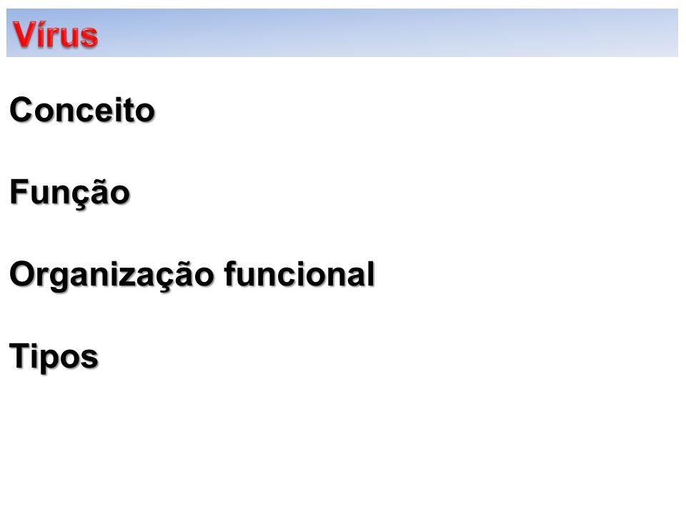 ConceitoFunção Organização funcional Tipos