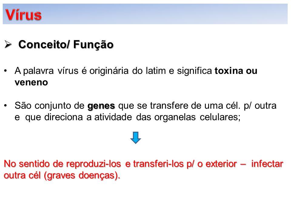  Conceito/ Função A palavra vírus é originária do latim e significa toxina ou veneno genesSão conjunto de genes que se transfere de uma cél. p/ outra