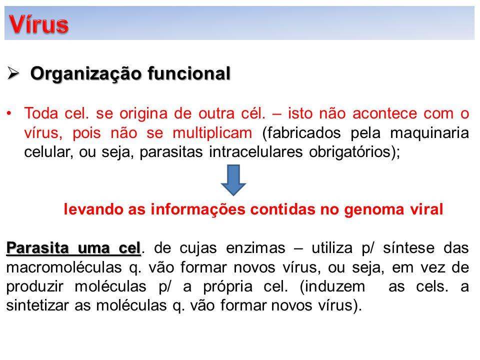  Organização funcional  Vírus é dotado de: Duas partes/porção:Duas partes/porção: -Central -Central (leva a informação genética- código [DNA ou RNA] e produzem outro vírus igual); -Periférica -Periférica (proteínas [protege o genoma] – possibilitar o vírus de identificar as cels.