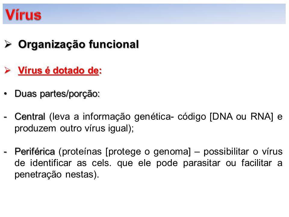  Organização funcional  Vírus é dotado de: Duas partes/porção:Duas partes/porção: -Central -Central (leva a informação genética- código [DNA ou RNA]