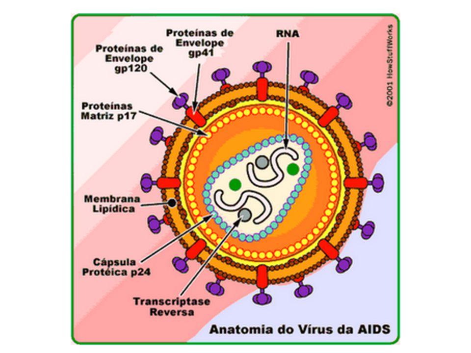 Organização funcional  Vírion  Vírion:  Partícula viral  Partícula viral completa que apresenta a capacidade de infectar uma cél.