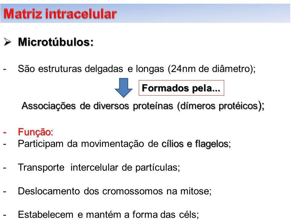  Microtúbulos: -São estruturas delgadas e longas (24nm de diâmetro); Associações de diversos proteínas (dímeros protéicos ); -Função: cílios e flagel
