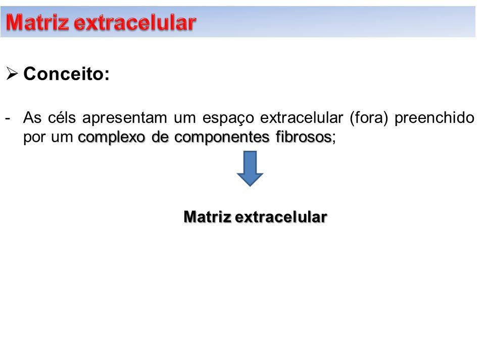  Conceito: complexo de componentes fibrosos -As céls apresentam um espaço extracelular (fora) preenchido por um complexo de componentes fibrosos; Mat