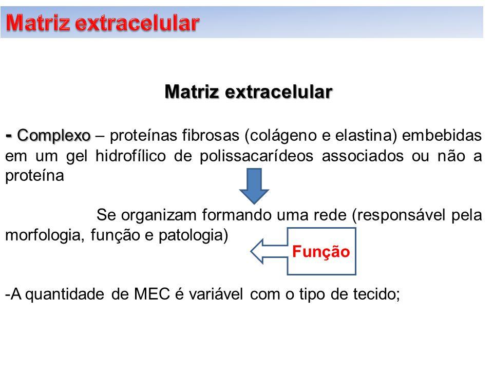 - Complexo - Complexo – proteínas fibrosas (colágeno e elastina) embebidas em um gel hidrofílico de polissacarídeos associados ou não a proteína Se or